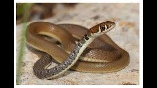 Даже змеи теперь воруют в России.