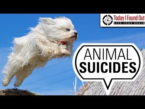 Are There Any Animals Other Than Humans That Commit Suicide?