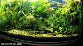 В интернет-магазине puzoo вы можете купить витаминные и. Фото зоомир унифлор (аква-7) минеральное удобрение д/водных растений 100мл.