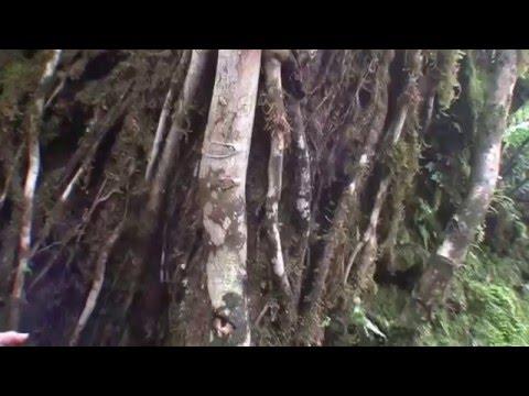 Costa Rica - 3: Monte Verde