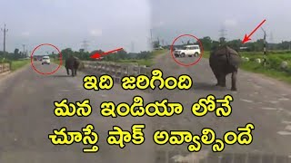 Hippopotamus Caught To Camera Running On Roads! | Wild Animals Found On Roads | Viral Videos