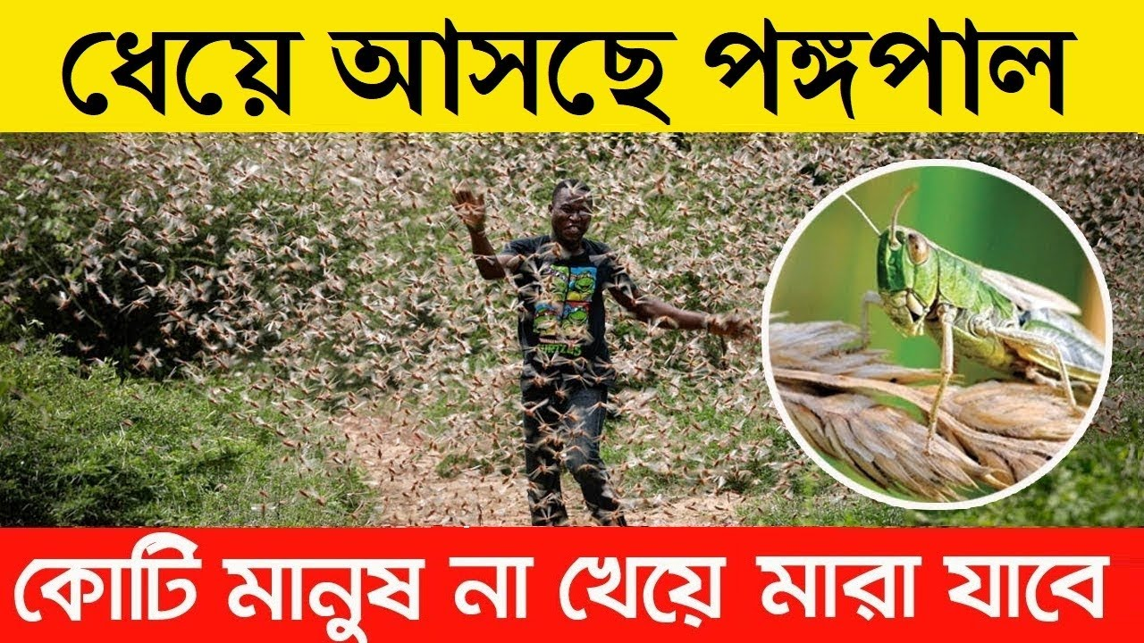 আসছে পঙ্গপাল, আমরা তৈরি তো? জানুন কি কি ক্ষতি করবে এরা | Locust Swarm Facts In Bangla