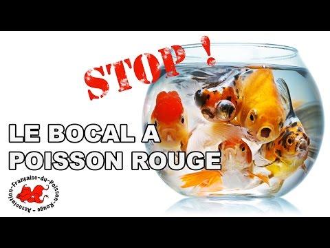 Mort d 39 un poisson rouge doovi for Bocal poisson rouge