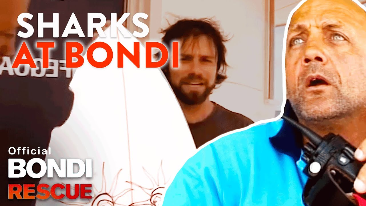 Download SHARKS at Bondi Beach - Top 5 Encounters