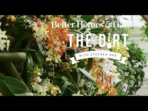 Orchid Show The Dirt Better Homes Gardens Youtube