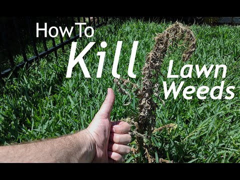 How To Spray Weeds In The Lawn for Beginners | DIY Lawn Tips Part 2