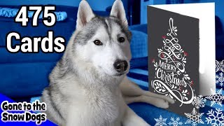 Over 475 Holiday Cards for the Huskies