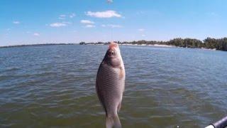 Летняя рыбалка на Днепре. Карась. Плотва. Подлещик.(Видеоотчет о рыбалке на реке Днепр. Летняя рыбалка на мирную рыбу, в улове присутствуют в основном карась..., 2015-08-05T20:40:04.000Z)