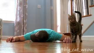 Реакция кошки на смерть хозяина
