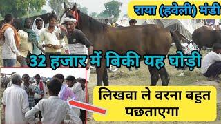 Raya Haveli Mandi 2019-राया (हवेली) मंडी में 32 हजार में बिकी यह घोड़ी