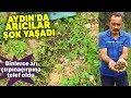 Sokak Hayvanlarını Beslemek İçin İstanbul'daki Dairesini Sattı