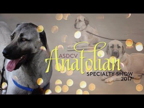 2017 Anatolian Shepherd Dog Specialty Championship Show