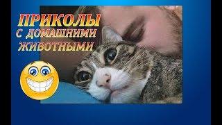 демотиваторы★ ПРИКОЛЫ С ДОМАШНИМИ И ДИКИМИ ЖИВОТНЫМИ ! -3 часть