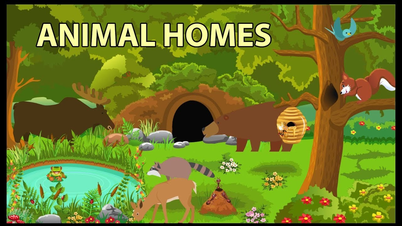 Image result for animal homes