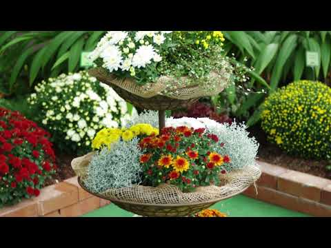 Kientzler Kundentage 2015 - Herbstzauber, Winterzauber, Chrysanthemen & Sommerstauden