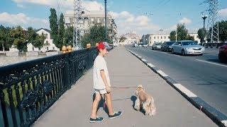 VLOG У ВЕТЕРИНАРА/ Собака боится УКОЛОВ/ДОКТОР ЛЕЧИТ ЖИВОТНЫХ/Делаем УКОЛ