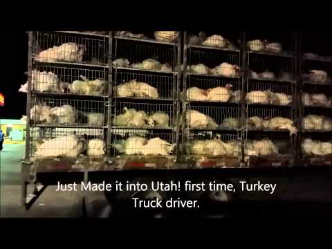 first Time in UTAH Turkey truck driver