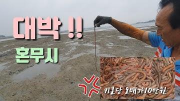 혼무시 잡는 도사님 !! 경력17년 !! 도사님이 사인조 !!