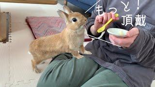 バナナが美味しすぎて体がビクンビクンしちゃうウサギ #952