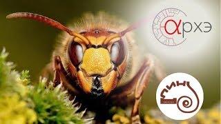Олеся Стрельникова: Кое-что об эволюции насекомых