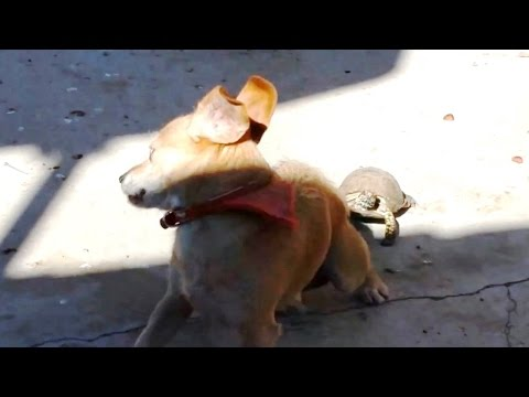 'Dogs vs. Tortoises and Turtles Compilation' || CFS