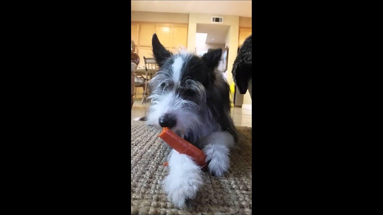 alacsony fehérjetartalmú étrend kutyák számára