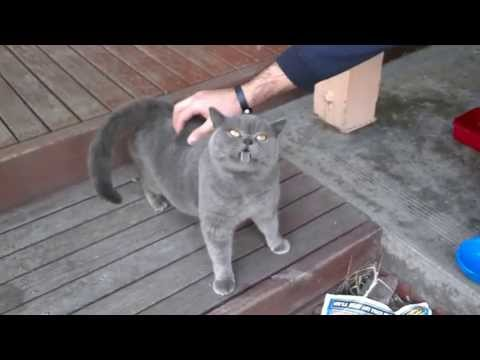 Adorable cat with a ticklish back