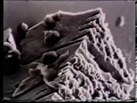 microbial ore leaching x264