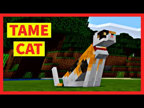 how-to-tame-a-cat-in-minecraft-(quick)