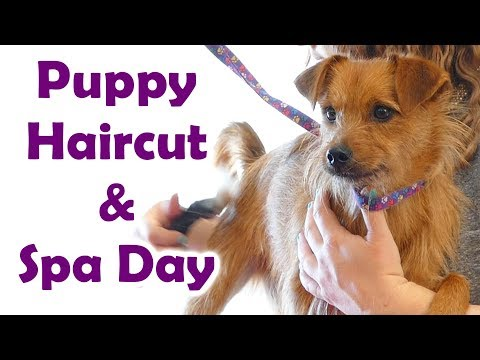 Real ASMR Haircut & Puppy Spa Treatment ✂ Brushing Sounds, Electric Shaver, Hair cut & Whispers