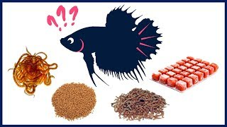 What Is the Best Food for Betta Fish?