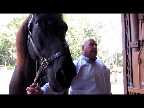 Tri-Circle-D Ranch at Fort Wilderness - Horse Lessons