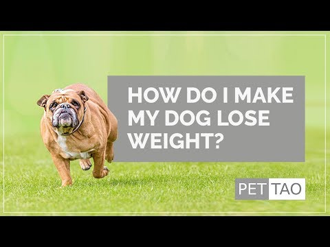 How Do I Make My Dog Lose Weight? - PET | TAO Holistic Pet Products
