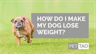 How Do I Make My Dog Lose Weight? - PET | TAO Pet School