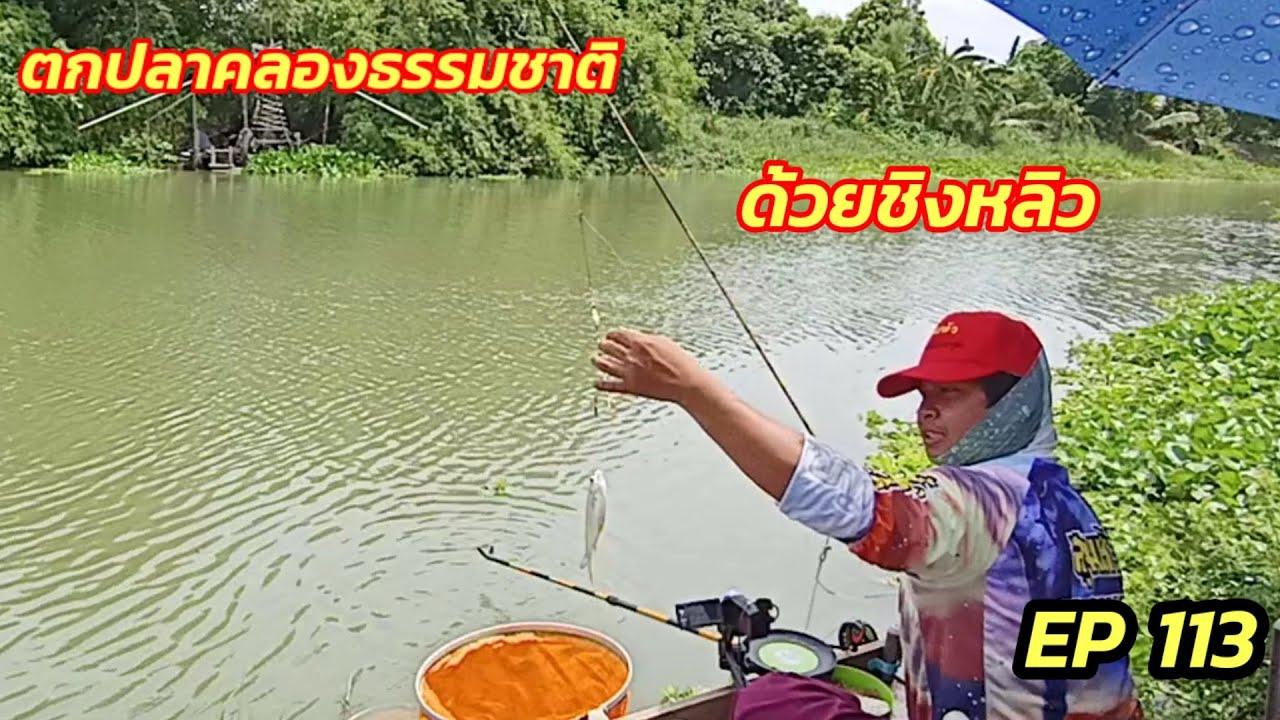 ตกปลาคลองธรรมชาติด้วยชิงหลิว EP 113 หมายคลองรางไทร