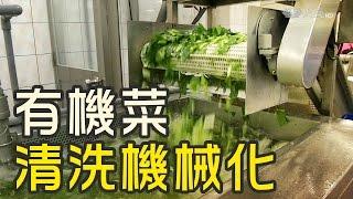 有機菜行銷 截切場包辦洗選物流
