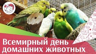 Всемирный день домашних животных на ilikepet