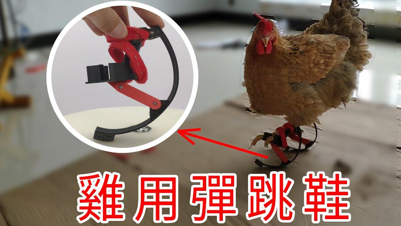 雞用彈跳鞋:博主花36小時給雞做了彈跳鞋,它能彈起來嗎?SKYRUNNER for chiken