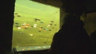 NaturaGart Teichfenster: Eine Glasscheibe im Gartenteich einbauen