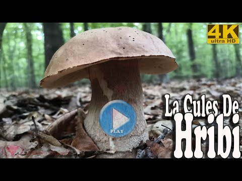 La Cules De Hribi 1 Video Ultra Hd UHD 4K