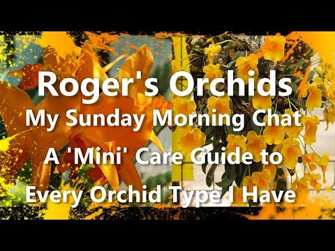 My Sunday Morning Chat - A 'Mini' Care Guide To Every Orchid Type I Have