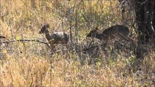 Download Video Animals and Birds of Africa MP3 3GP MP4