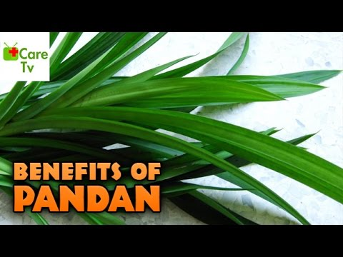Health Benefits Of Pandan | Care Tv