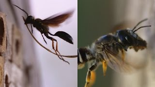 The Biggest Difference Between Wasps & Bees