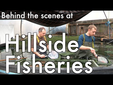 Behind The Scenes At Hillside Fisheries