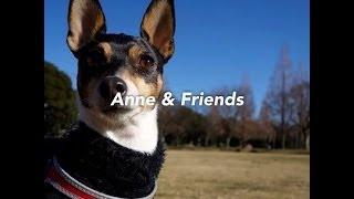 我が家のトイフォックステリア、アンのこれまでに出会った友達たちの写...