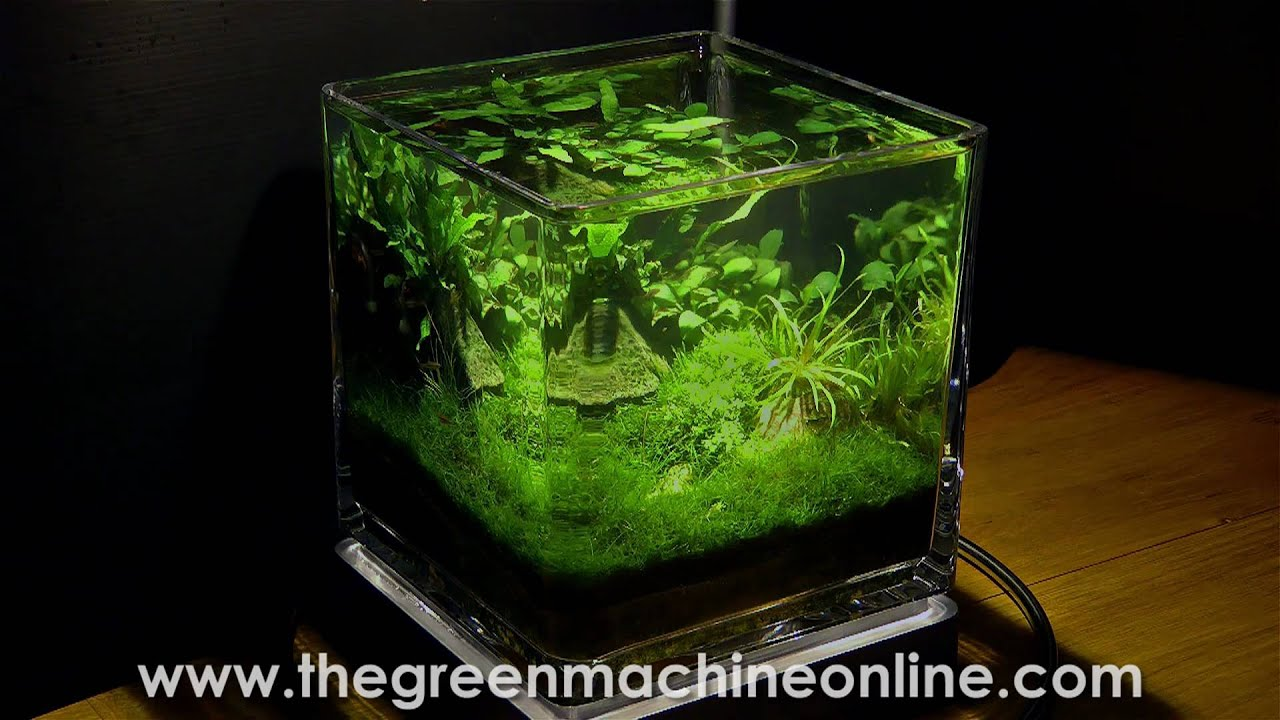 Planted Nano Pico Aquarium Aquascape By The Green Machine Youtube