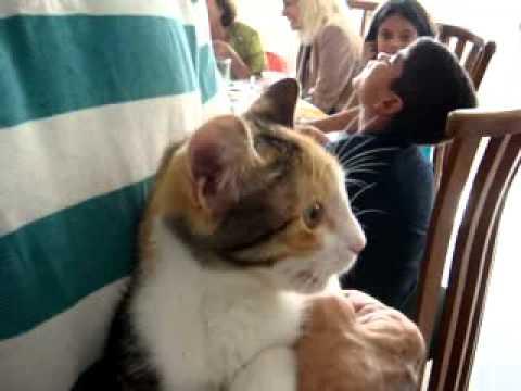 Dos Gatos discutiendo