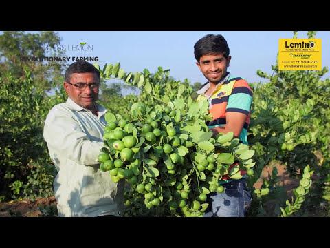 Seedless Lemon Farming (LEMINO™)
