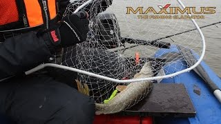 Спиннинг MAXIMUS ULTIMATUM. Ловля щуки, судака и окуня на спиннинг. Kamfish